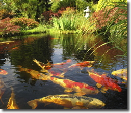 Water Gardens Bring Serenity To Your Backyard. They Include Aquatic Plants  And Flowers, And May Support Koi. Water Gardens Can Be Small And Only Need  2 Feet ...